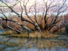 January Willows, by Bonnie Williams - Brookeland, TX